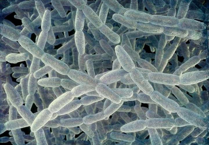 Deadly Legionnaires Disease Spreads In Portugal, 200 Tested Positive
